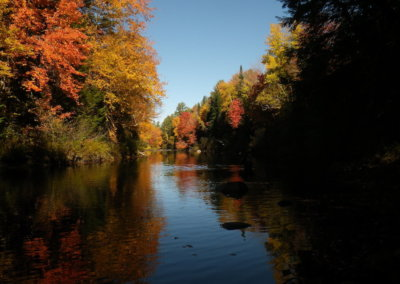 Fall Foliage Tours in Maine